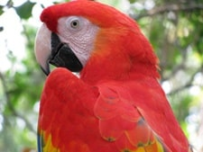 parrotsideeye
