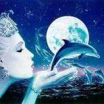 dolphinwishes