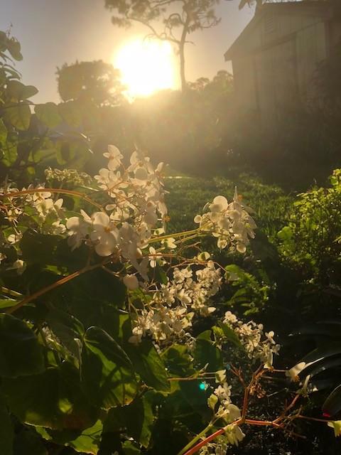 Engulfed in Light Mist Bliss