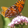 orange black butterfly is landing on a feeding flower plant, How to Manifest When Things Fall Apart